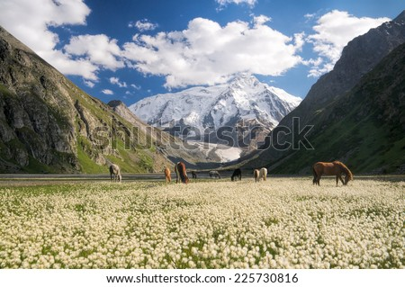 Herd of horses grazing in picturesque mountains in Kyrgyzstan - stock photo