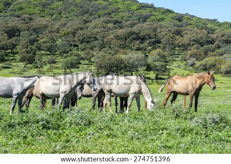 Herd of horses in a meadow - stock photo