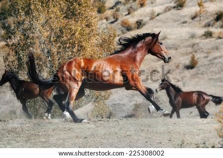Herd of horses in autumn field - stock photo