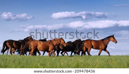 Herd of horses in the pasture rides on the beautiful background of the sky with clouds - stock photo