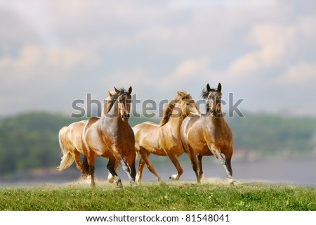 herd of horses near the river - stock photo