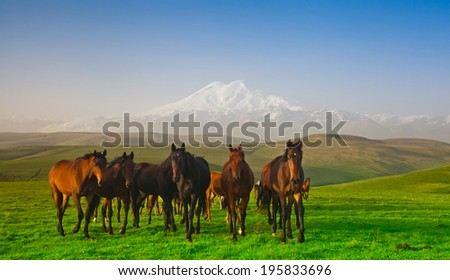 Herd of horses on a pasture in mountains, the Caucasus, Russia - stock photo