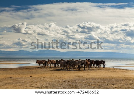 Herd of horses on a watering place on the background of the cloudy sky