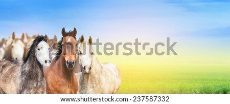 herd of horses on background of  summer pasture,sky and sunlight, banner for website - stock photo