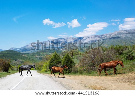 Herd of horses passes road in the mountains against the blue sky - stock photo