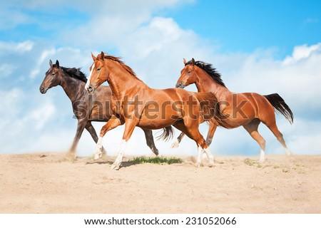 Herd of horses running - stock photo