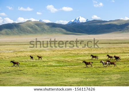 Herd of horses running gallop in the mountains - stock photo