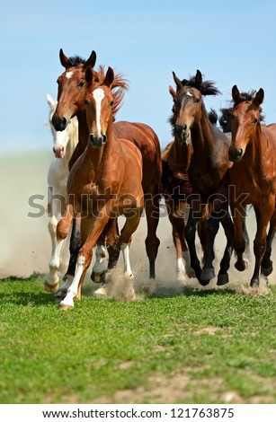 Herd of horses running gallop on the field