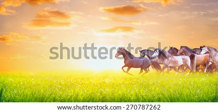 herd of horses running on sunny summer pasture over sunset sky, banner for website - stock photo
