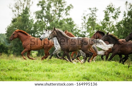 Herd of horses running on the pasture - stock photo