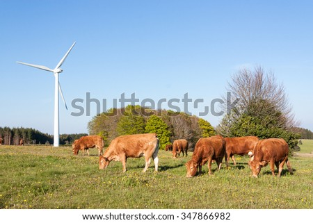 Herd of Limousin beef cows grazing in evening light in a spring pasture in front of a wind turbine providing renewable electricity from the conversion of the kinetic energy of the wind - stock photo