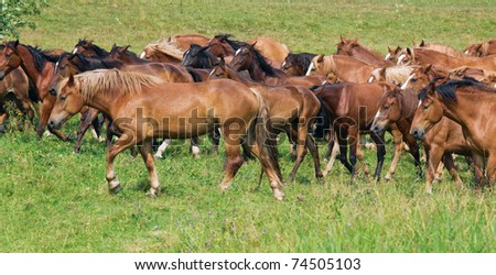 Herd of red horses on a pasture.