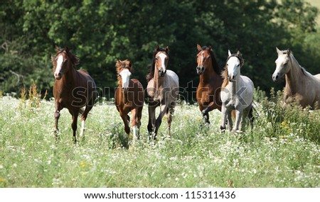 Herd of running horses - stock photo