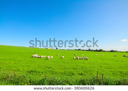 Herd of sheep on a green meadow in Sardinia, Italy - stock photo