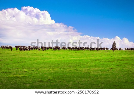 Herd of sheeps browsing in the highlands meadow with the shepherd - stock photo