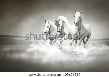 Herd of white horses running through water - stock photo