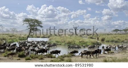 Herd of wildebeest and zebras in Serengeti National Park, Tanzania, Africa - stock photo