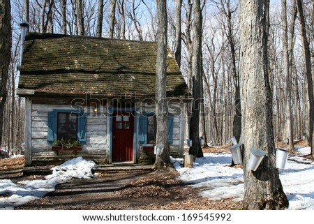Heritage cottage with pails on maple trees to collect sap for maple syrup - stock photo