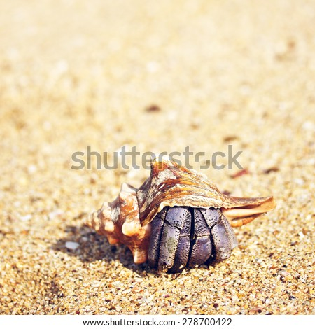 hermit crab on a beach in Andaman Sea - stock photo