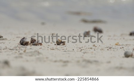 hermit crab on lovely atoll qulaan islands  - stock photo
