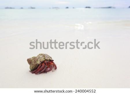 Hermit Crab on sand beach Thailand. - stock photo