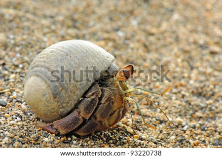 Hermit Crab on the Beach, Corcovado National Park, Costa Rica - stock photo