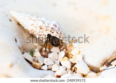 Hermit crab walking on beach - stock photo
