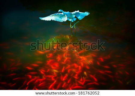 heron fishing - stock photo