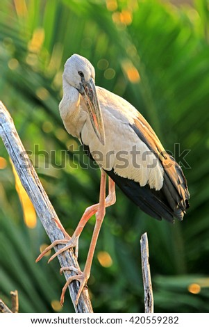 Heron on branch in nature - stock photo