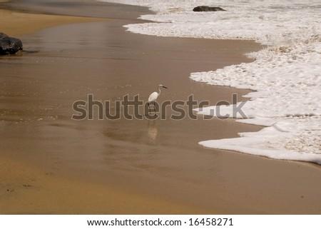 heron on the beach - stock photo