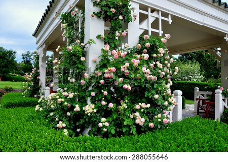 Hershey, Pennsylvania - June 7, 2015:  The Rose Garden gazebo with climbing pink roses at the renowned Hershey Gardens *