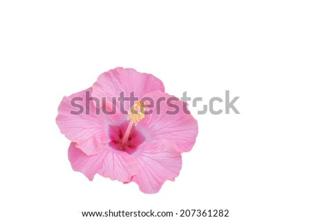 Hibiscus flower Clipping Path on white - stock photo