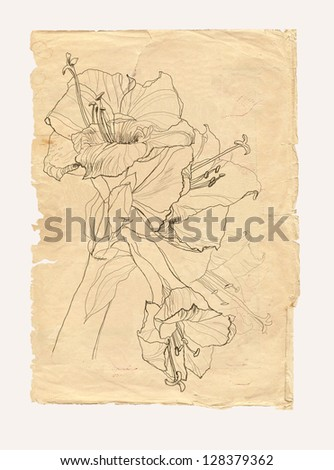 Hibiscus flower drawing on old paper background