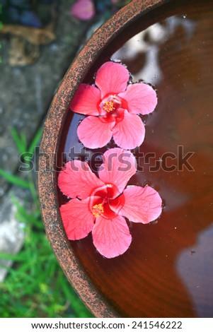 hibiscus flower in water. - stock photo