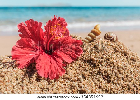 Hibiscus flower on the shore - stock photo