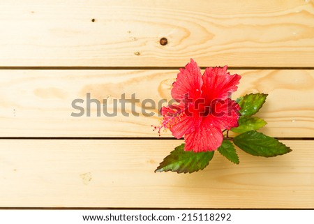 hibiscus red flower