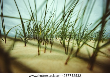 hidden in the grass, the grass in the sand by the sea - stock photo