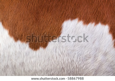 Hide a cow. Macro - stock photo