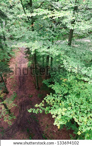 High angle view of of scenic forest. tall trees and lonely forest road. Birds eye view. Out of office. outstanding view of the wonderful Bavarian country side from Tree Egg Passau Germany. - stock photo
