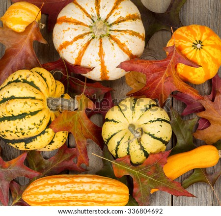High angled view of autumn still life objects consisting of assorted gourds, pumpkins, and oak leaves on rustic wood.  - stock photo