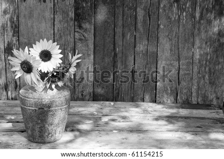 High contrast, desaturated  image of a rustic vase with beautiful sunflowers in the partial shade on a rustic, grunge background with copy space. - stock photo
