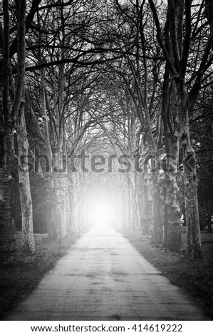 high contrasted black and white conceptual image with forest tunnel and light- some noise are added for stronger abstract spooky effect