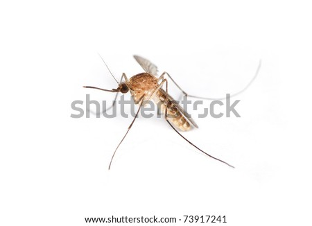 High detail macro of a live mosquito over a white surface.