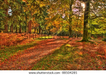 High Dynamic Range shot of a forest path in Autumn. Taken in the New Forest in Hampshire, England. - stock photo