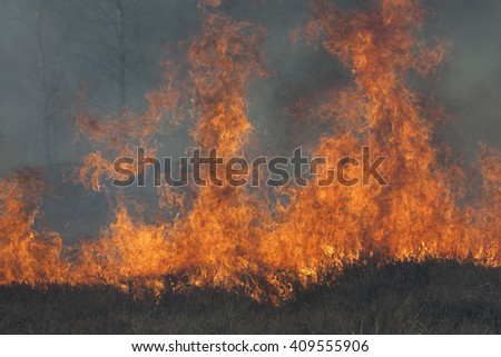 High flames on dark background. Wood fire. Bush fire.
