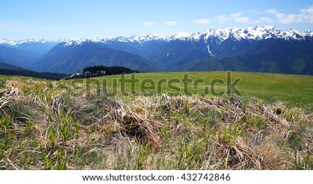 High grassy plain atop Hurricane Ridge in Olympic National Park, Washington.