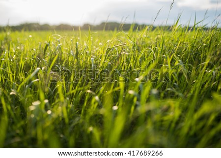 high green grass in field - stock photo