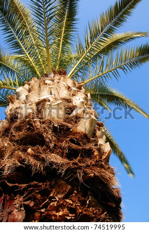 high green palm crown
