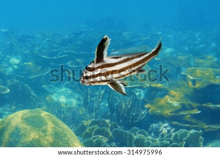 High hat stock images royalty free images vectors for High hat fish