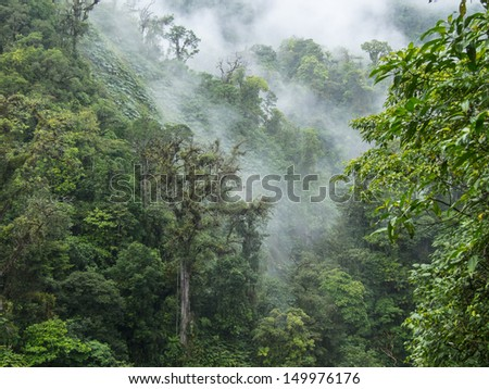 High in the Costa Rican Cloud Forest - stock photo